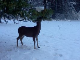Deer Eating by Spaz-Twitch11-15-10
