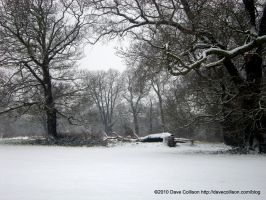 Winterscape in the park by TheBigDaveC