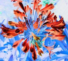 Trippy Flower 2 by Xercesa
