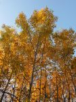 Tallest of Autumns by Caitie43