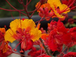 Fire Flowers by Reyson7