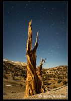 Bristlecone Star Trails by narmansk8