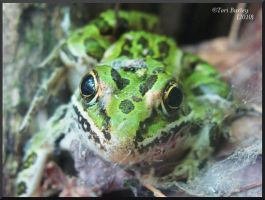 leopard frog by WorldWar-Tori
