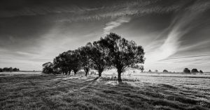 Willows by EmilStojek
