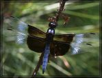 Dragonfly 40D0011523 by Cristian-M