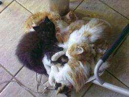7 cats on 1 chaire-pillow by Superxme