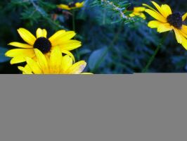 more yellow flowers by rikuforstock