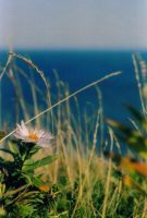 Pink Flower and the Atlantic by 8ankH