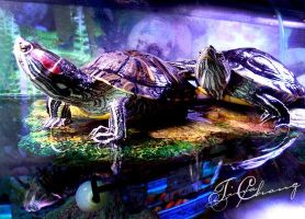 TURTLES by tinachang89