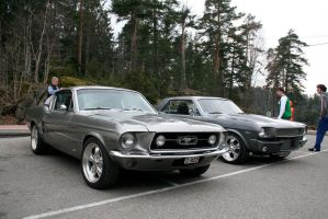 ford mustangs by larro