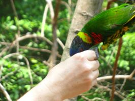 Feed the birds tuppence Nashville Zoo 3 by TheNormal1