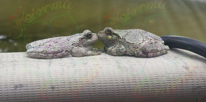 Froggy Love by Kiroma
