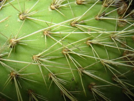 spikey cactus macro by kayne-stock