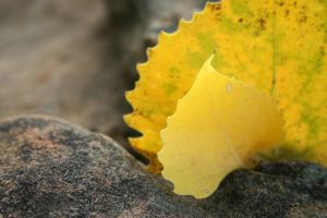 Autumn Leaf's Little Sister by pricegotphoto