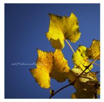 yellow flags by reb70
