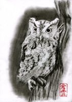 Screechowl by ElliCrown