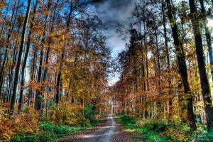 Road in the woods by adriancodre
