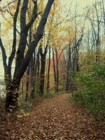 A Walk in Fall by Bethany1994