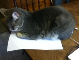 my cat wouldn't let me do my homework by dogmaster22