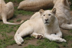 White cub by CitronVertStock