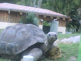 Galapagos Tortoise by damnheliotrope