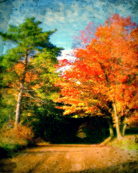 autumn memories by Toadsmoothy2