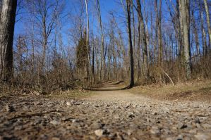 Ground Level Woodland Trail 01 by KYghost