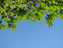 Leaves in the Sky by Lexnar
