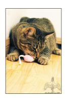 Toy Mouse by XetsaPhoto
