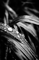Raindrops Keep Falling by duvessa2