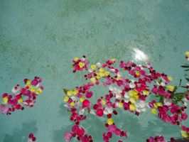 Rose Petals Float Away by yaya324