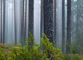 Misty Day In The Forest by Nitrok