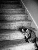 Cat Still On The Stairs by MoonwalkingHorse