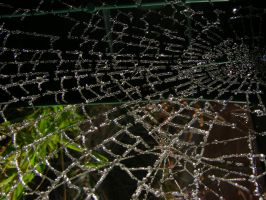 Frosted Web6 by Tasastock