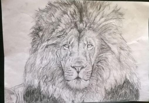 Lion by ChocoBookworm
