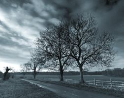 Trees Early Morning by davepphotographer