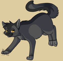 Graypaw ref pic by SassyHeart