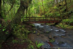 Susan Falls Creek Bridge by La-Vita-a-Bella