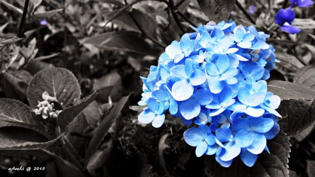 Blue Accent Flower by aAveLi