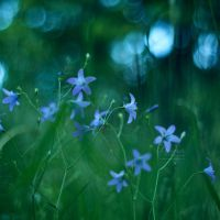 Dreamy by NanaPHOTOGRAPHY