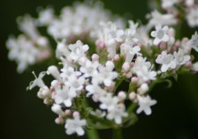 White Flowers by Emz-Photography