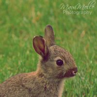 Baby bunny. by MauiMelle