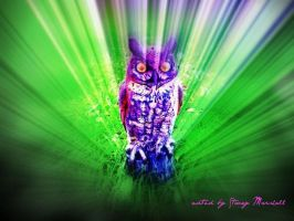 owl on drugs? by staceycole