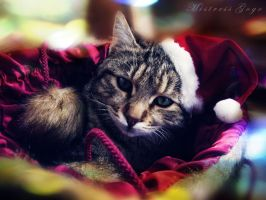 Cat-mas Miracle by blondepassion