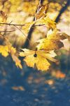 .: Diving into Autumn Colors :. by Frank-Beer