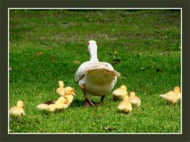 Mom lead the way by Buble