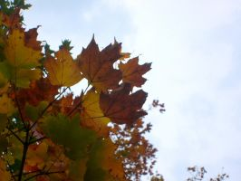 turning leaves by catrina339