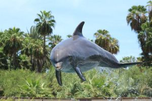 Dolphin jumped in mid air by omarvel1
