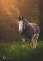 Loch Lomond Horse (edit) by Aenkill