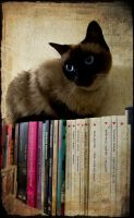 Her favorite author is? by piove
